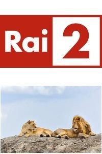 Locandina Tanzania, i leoni e i Masai  Streaming