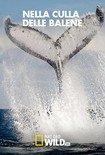 Locandina Nella Culla delle Balene  Streaming